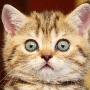 В Александро-Невской лавре пройдет фестиваль «Лаврский кот»