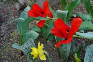 Весна. Храм святой великомученицы Ирины